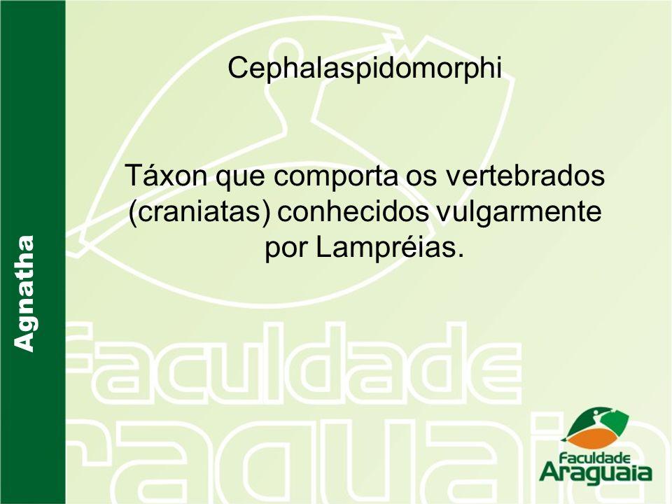 Agnatha Cephalaspidomorphi Táxon que comporta os vertebrados (craniatas) conhecidos vulgarmente por Lampréias.