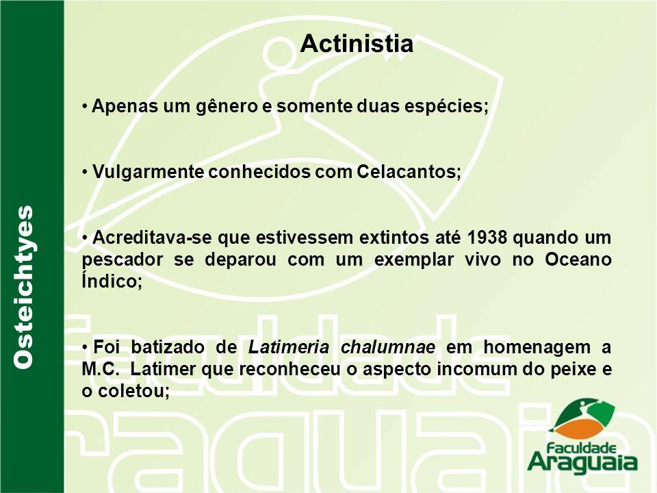 Osteichtyes Actinistia Apenas um gênero e somente duas espécies; Vulgarmente conhecidos com Celacantos; Acreditava-se que estivessem extintos até 1938