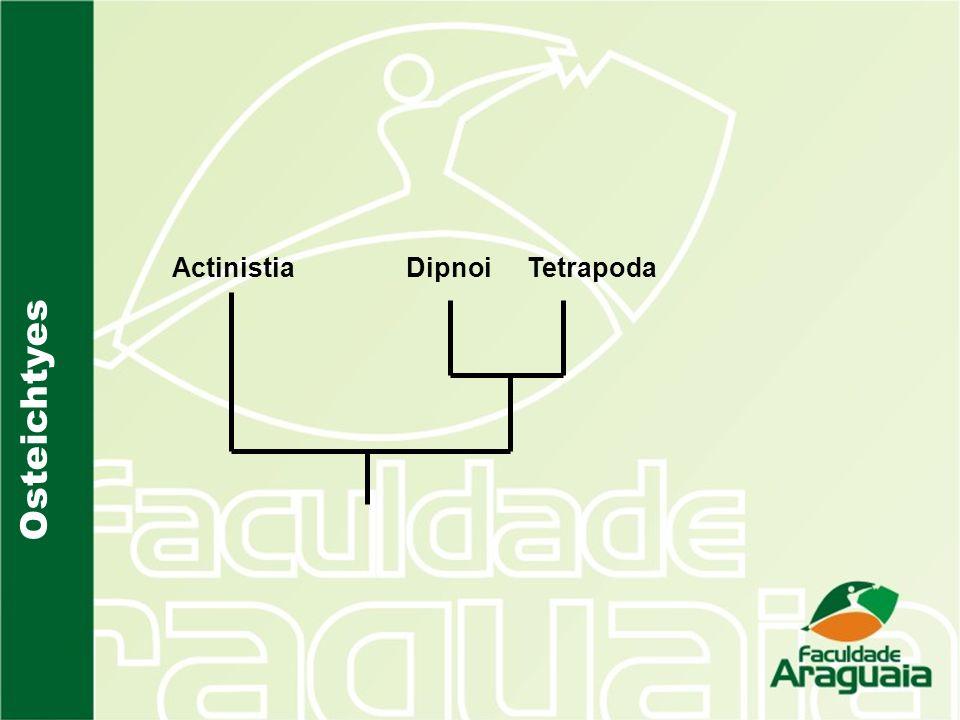 ActinistiaTetrapoda Dipnoi
