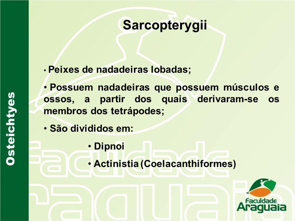 Osteichtyes Sarcopterygii Peixes de nadadeiras lobadas; Possuem nadadeiras que possuem músculos e ossos, a partir dos quais derivaram-se os membros do