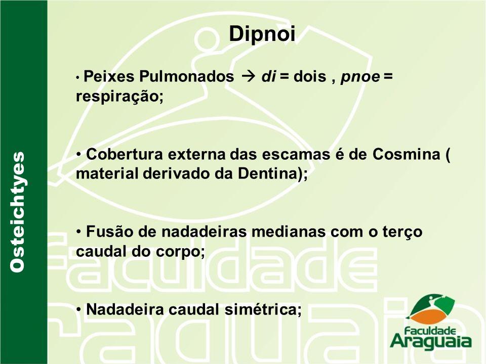 Osteichtyes Dipnoi Peixes Pulmonados di = dois, pnoe = respiração; Cobertura externa das escamas é de Cosmina ( material derivado da Dentina); Fusão d