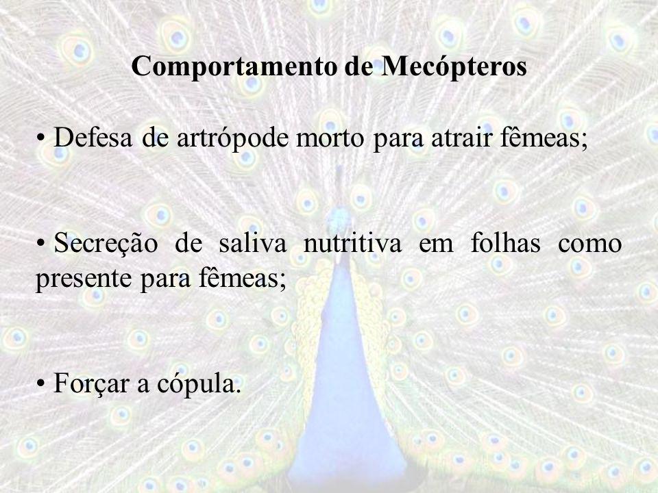 Comportamento de Mecópteros Defesa de artrópode morto para atrair fêmeas; Secreção de saliva nutritiva em folhas como presente para fêmeas; Forçar a c