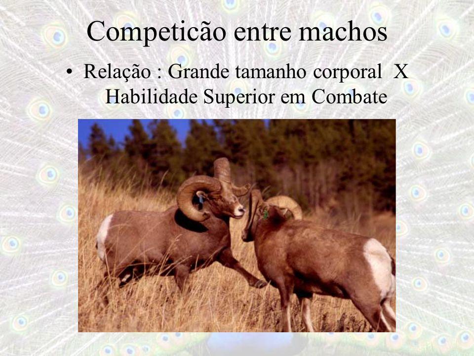 Competicão entre machos Relação : Grande tamanho corporal X Habilidade Superior em Combate