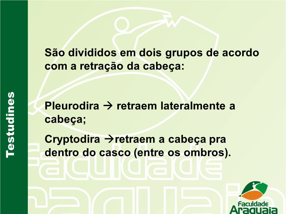 Testudines São divididos em dois grupos de acordo com a retração da cabeça: Pleurodira retraem lateralmente a cabeça; Cryptodira retraem a cabeça pra
