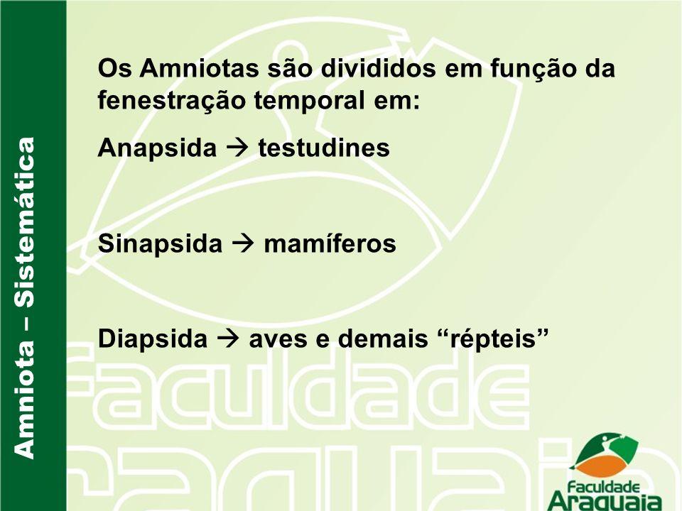 Amniota – Sistemática Os Amniotas são divididos em função da fenestração temporal em: Anapsida testudines Sinapsida mamíferos Diapsida aves e demais r