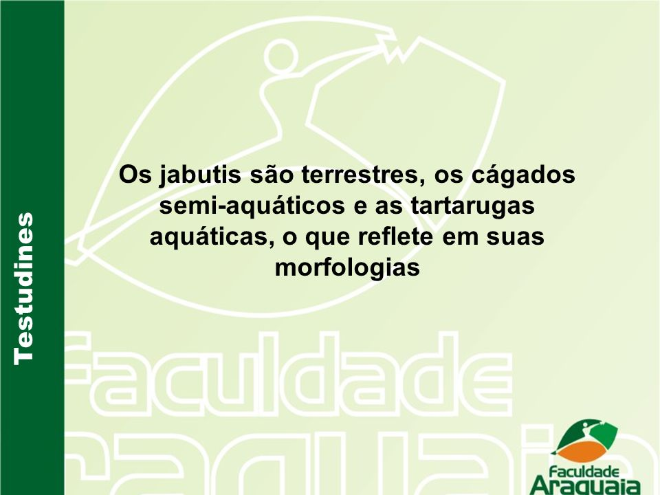 Testudines Os jabutis são terrestres, os cágados semi-aquáticos e as tartarugas aquáticas, o que reflete em suas morfologias