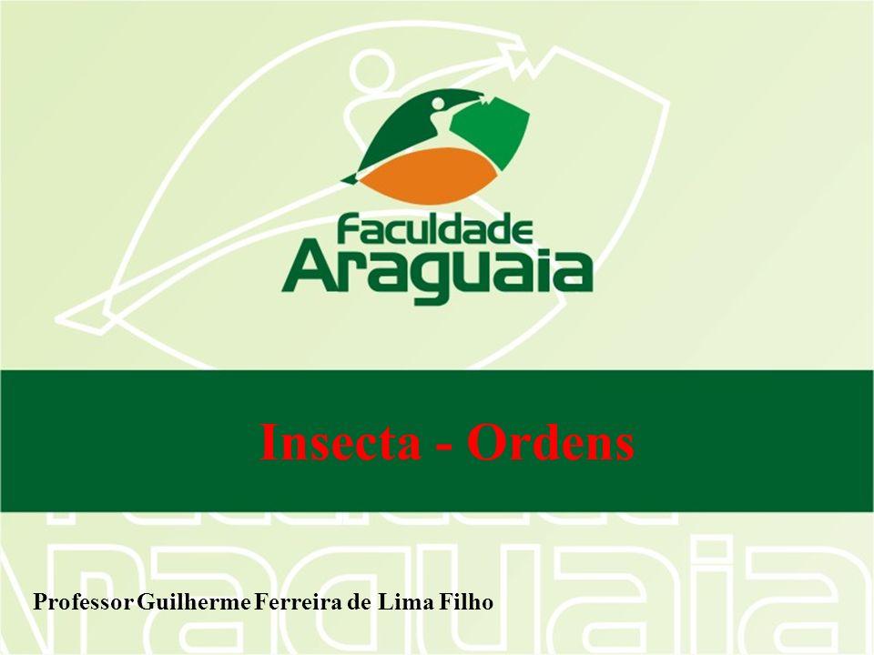 Ordem Trichoptera Tricho = pêlo Holometábulos Larvas aquáticas Larvas constroem casinhas