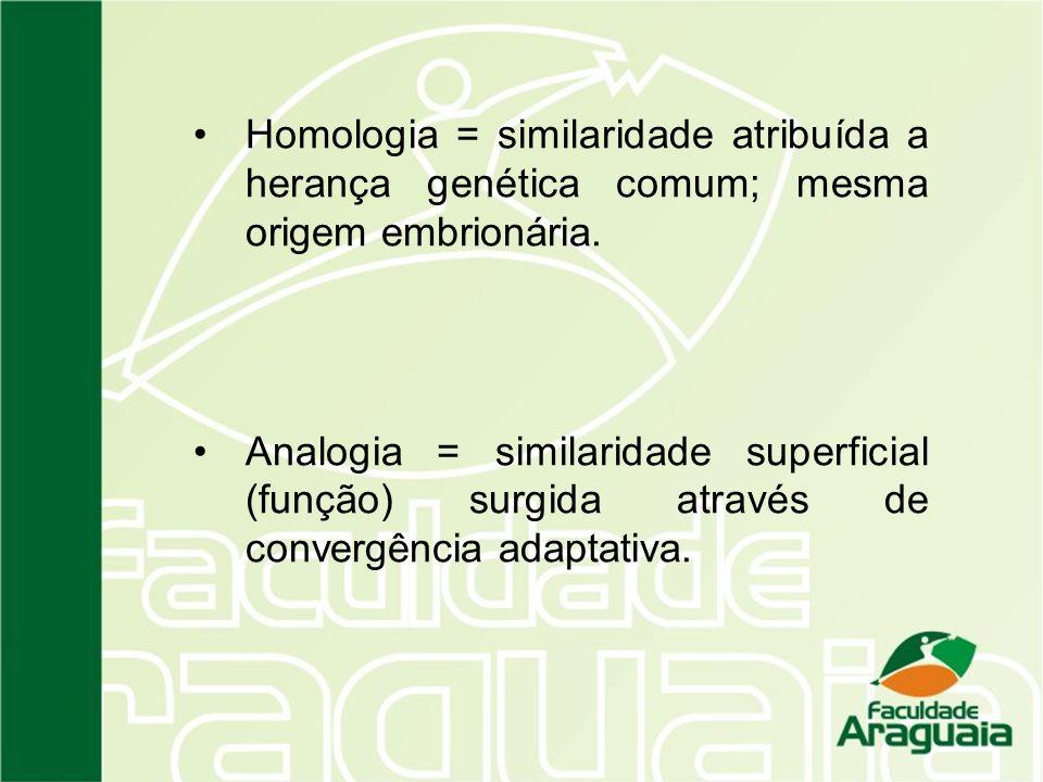 Homologia = similaridade atribuída a herança genética comum; mesma origem embrionária. Analogia = similaridade superficial (função) surgida através de