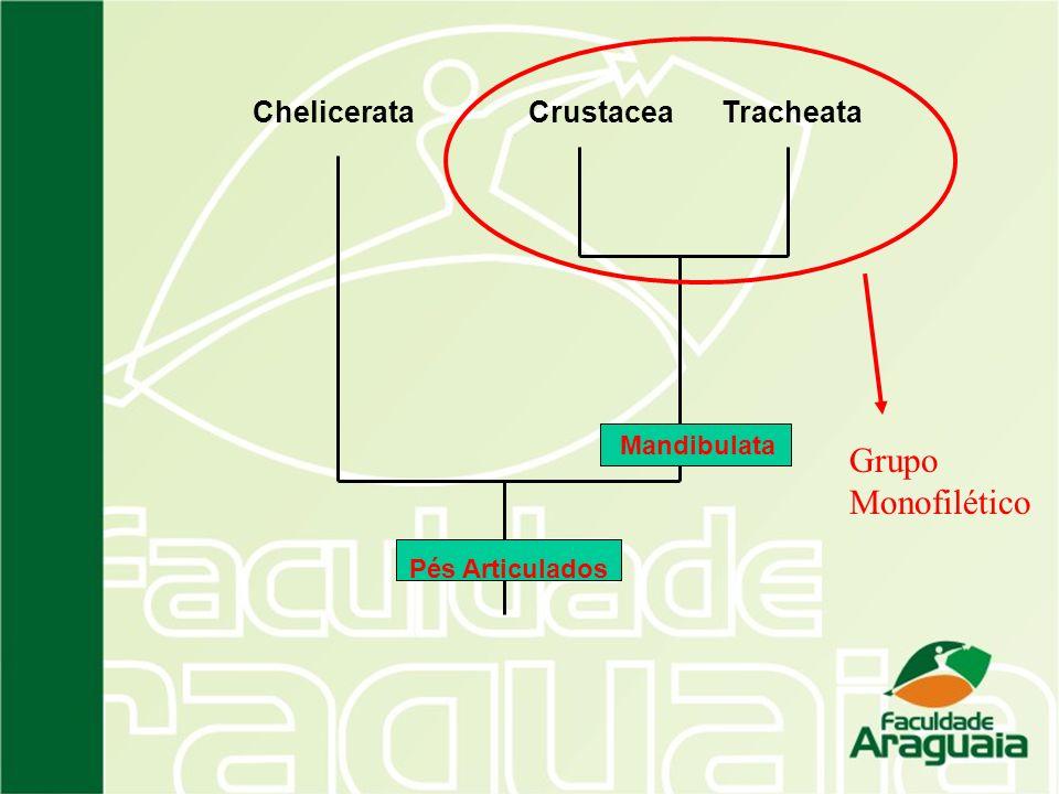 ChelicerataCrustaceaTracheata Mandibulata Pés Articulados Grupo Monofilético