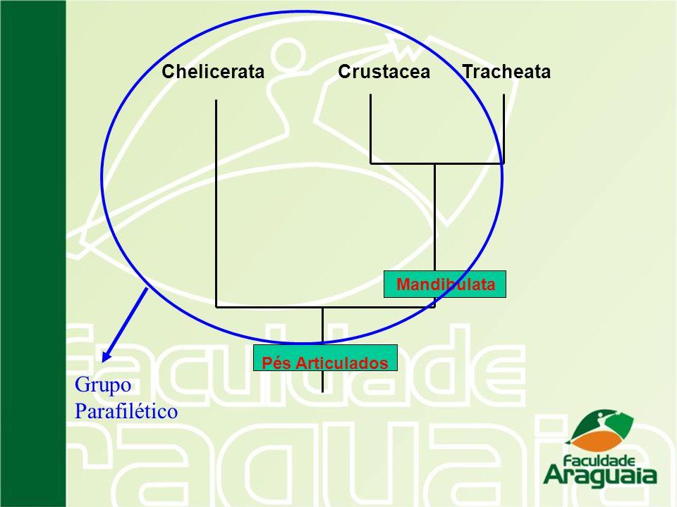 ChelicerataCrustaceaTracheata Mandibulata Pés Articulados Grupo Parafilético