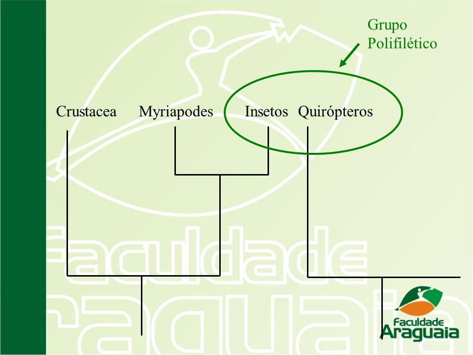 QuirópterosInsetosMyriapodesCrustacea Grupo Polifilético