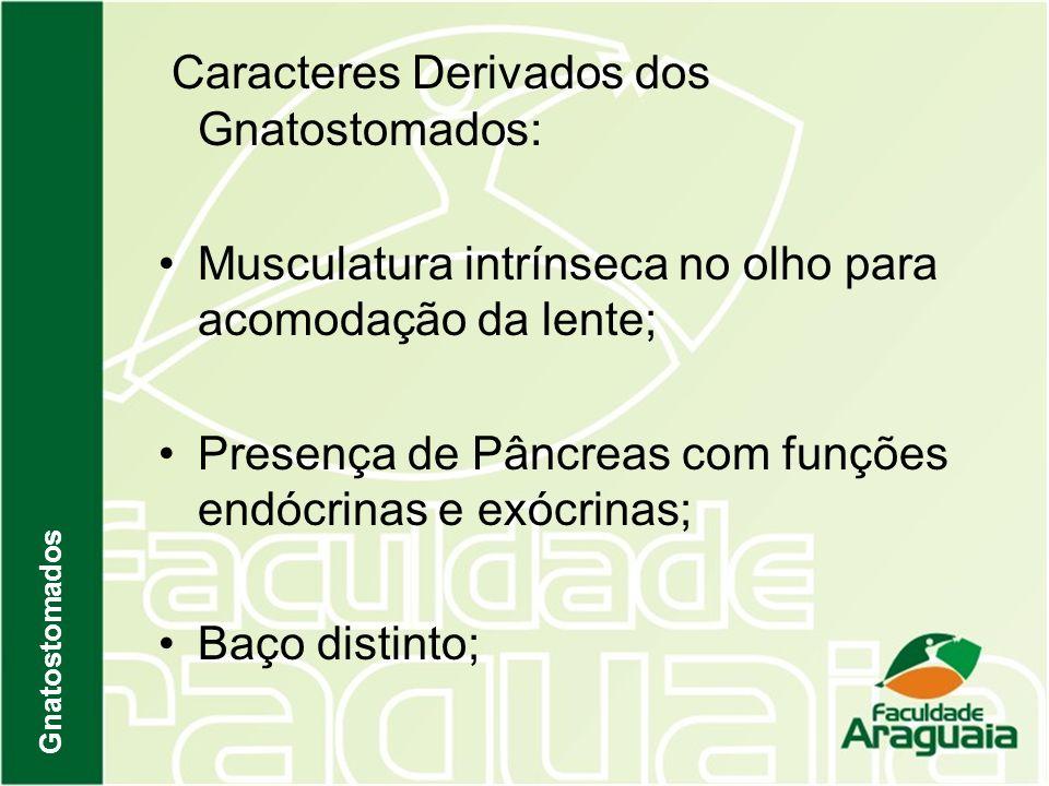 Caracteres Derivados dos Gnatostomados: Musculatura intrínseca no olho para acomodação da lente; Presença de Pâncreas com funções endócrinas e exócrin