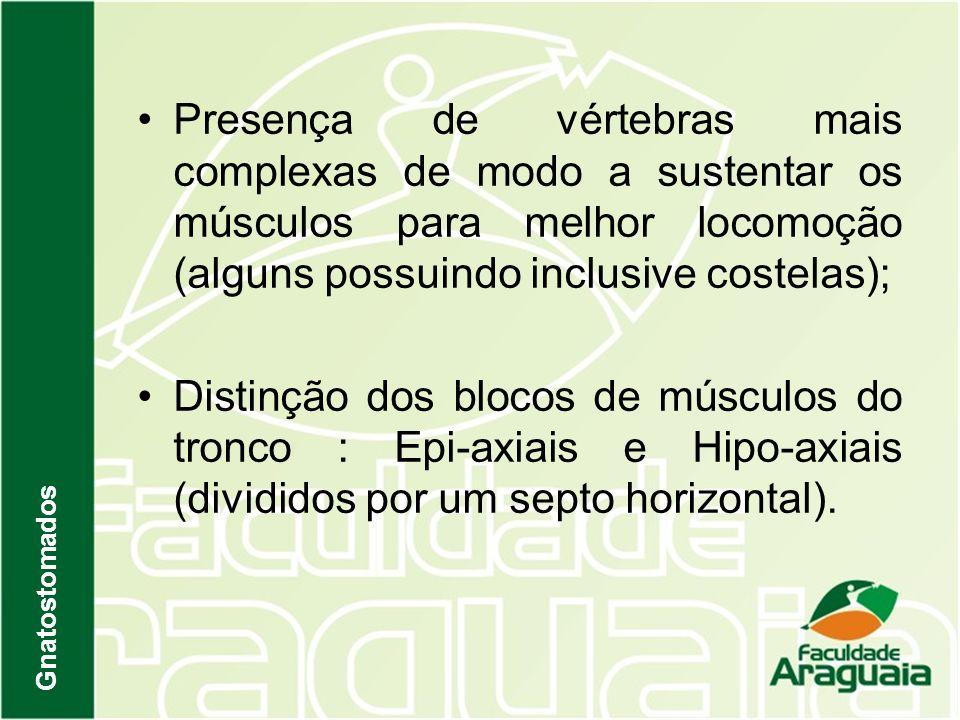 Presença de vértebras mais complexas de modo a sustentar os músculos para melhor locomoção (alguns possuindo inclusive costelas); Distinção dos blocos