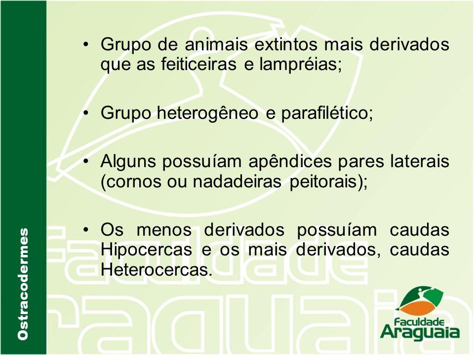 Grupo de animais extintos mais derivados que as feiticeiras e lampréias; Grupo heterogêneo e parafilético; Alguns possuíam apêndices pares laterais (c
