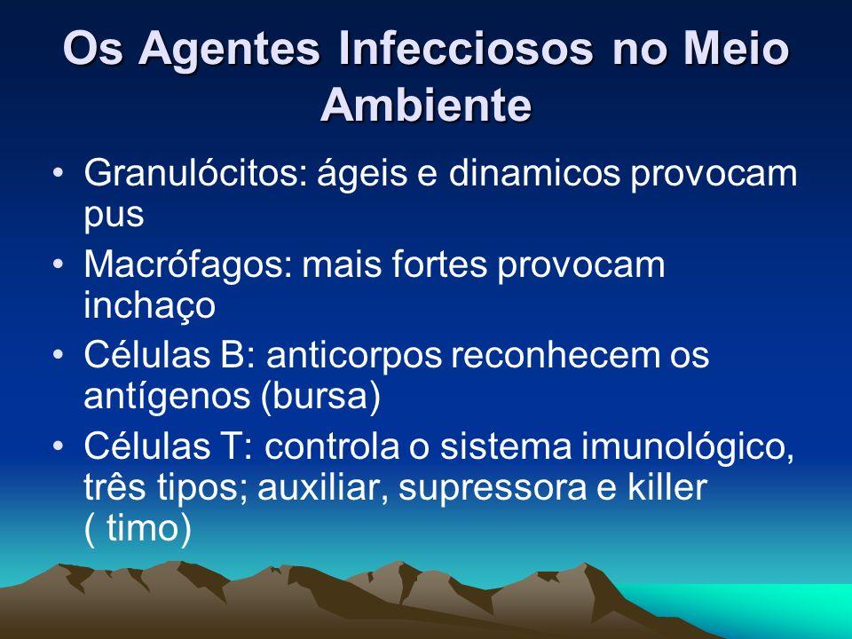 Os Agentes Infecciosos no Meio Ambiente Granulócitos: ágeis e dinamicos provocam pus Macrófagos: mais fortes provocam inchaço Células B: anticorpos re