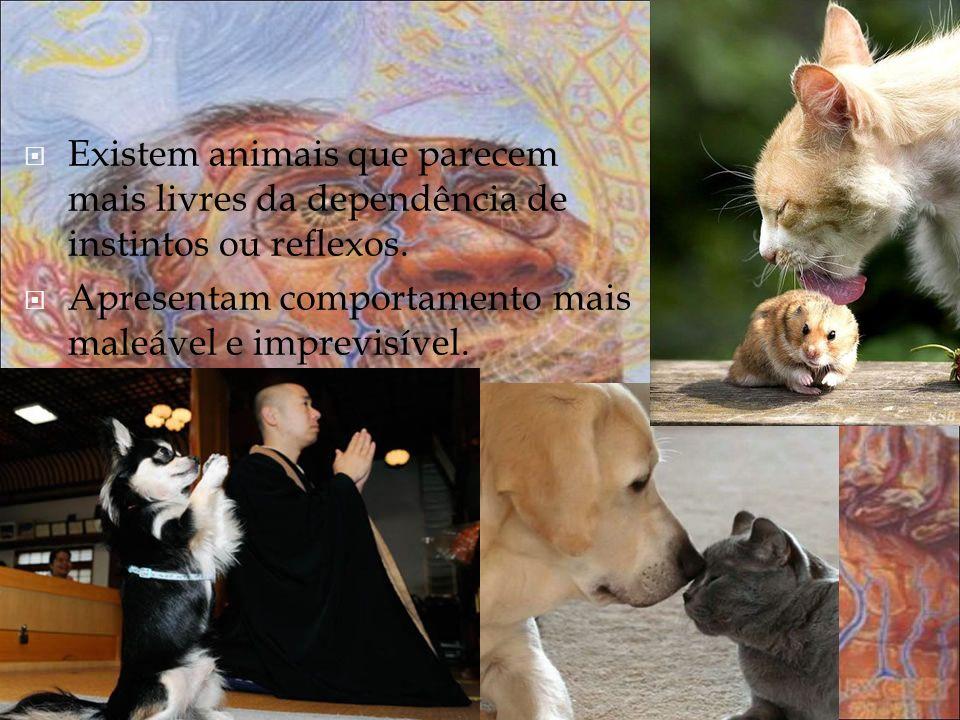 Existem animais que parecem mais livres da dependência de instintos ou reflexos. Apresentam comportamento mais maleável e imprevisível.