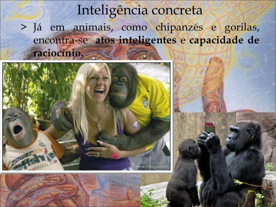 Inteligência concreta >Já em animais, como chipanzés e gorilas, encontra-se atos inteligentes e capacidade de raciocínio.