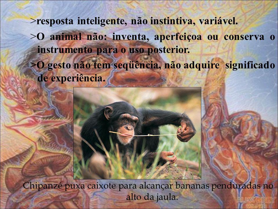 >resposta inteligente, não instintiva, variável. >O animal não: inventa, aperfeiçoa ou conserva o instrumento para o uso posterior. >O gesto não tem s