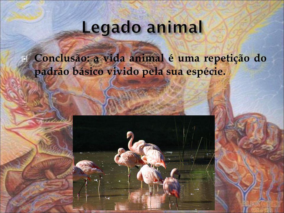 Conclusão: a vida animal é uma repetição do padrão básico vivido pela sua espécie.