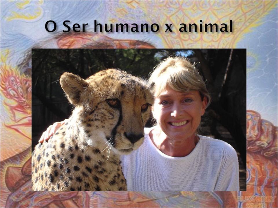 Os animais são capacitados para Enfrentar certas dificuldades.