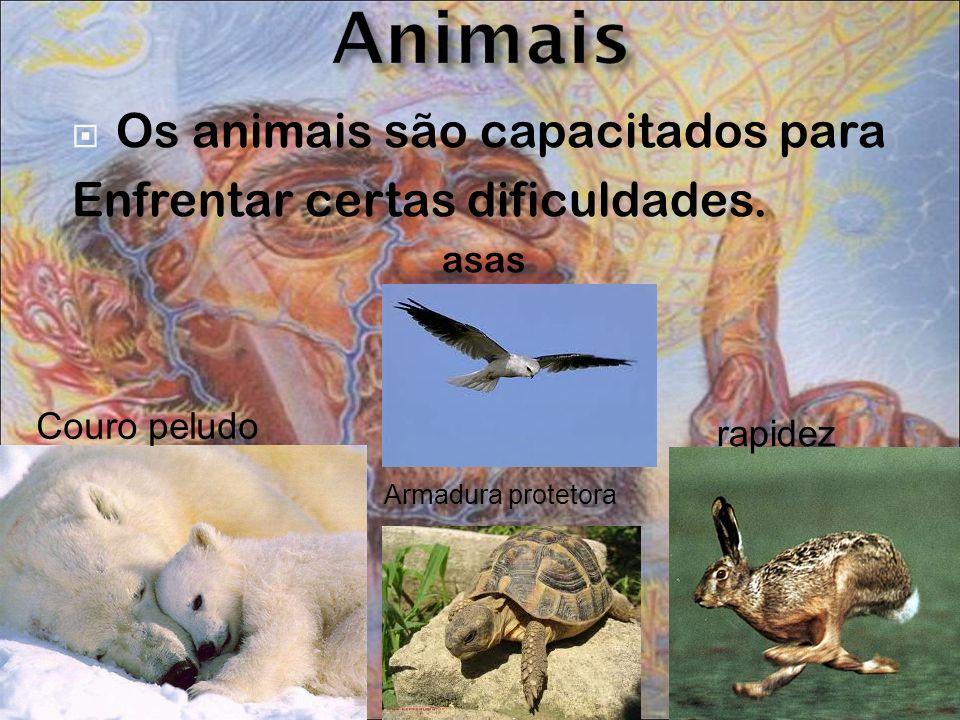 Os animais são capacitados para Enfrentar certas dificuldades. asas Couro peludo Armadura protetora rapidez