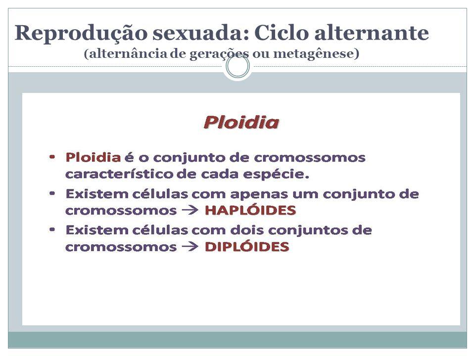 Reprodução sexuada: Ciclo alternante ( alternância de gerações ou metagênese)