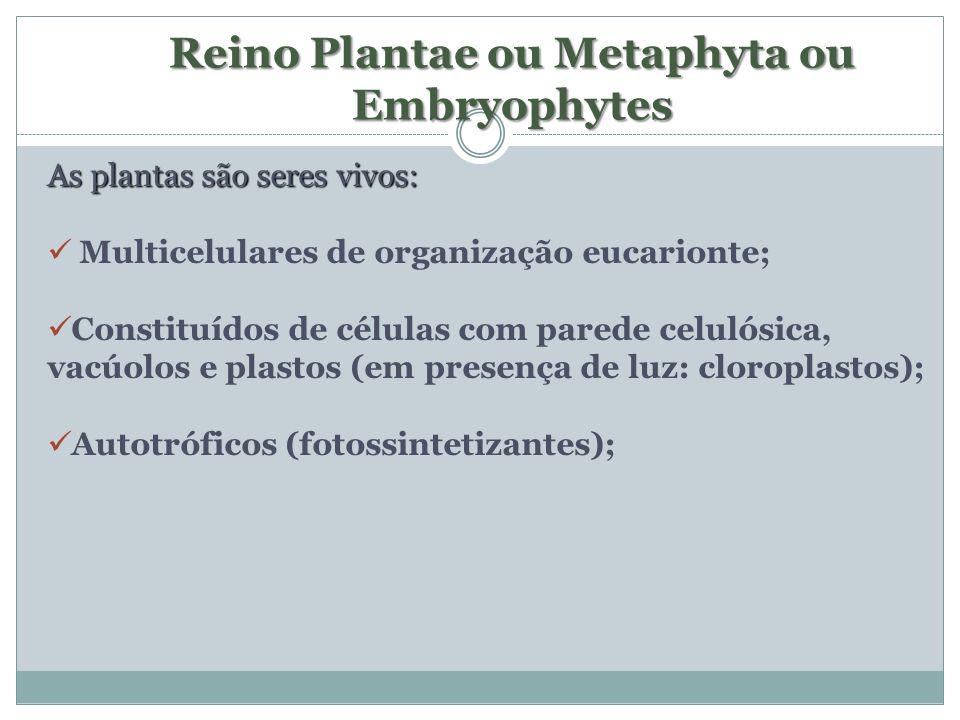 Reino Plantae ou Metaphyta ou Embryophytes As plantas são seres vivos: Multicelulares de organização eucarionte; Constituídos de células com parede ce