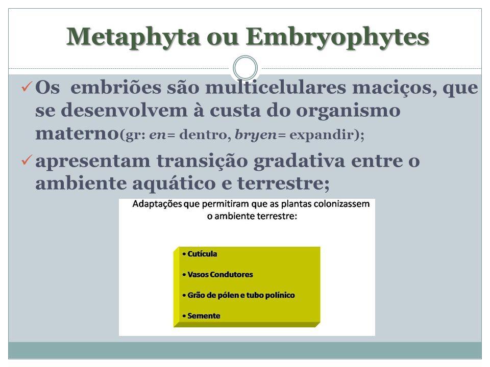 Metaphyta ou Embryophytes Metaphyta ou Embryophytes Os embriões são multicelulares maciços, que se desenvolvem à custa do organismo materno (gr: en= d