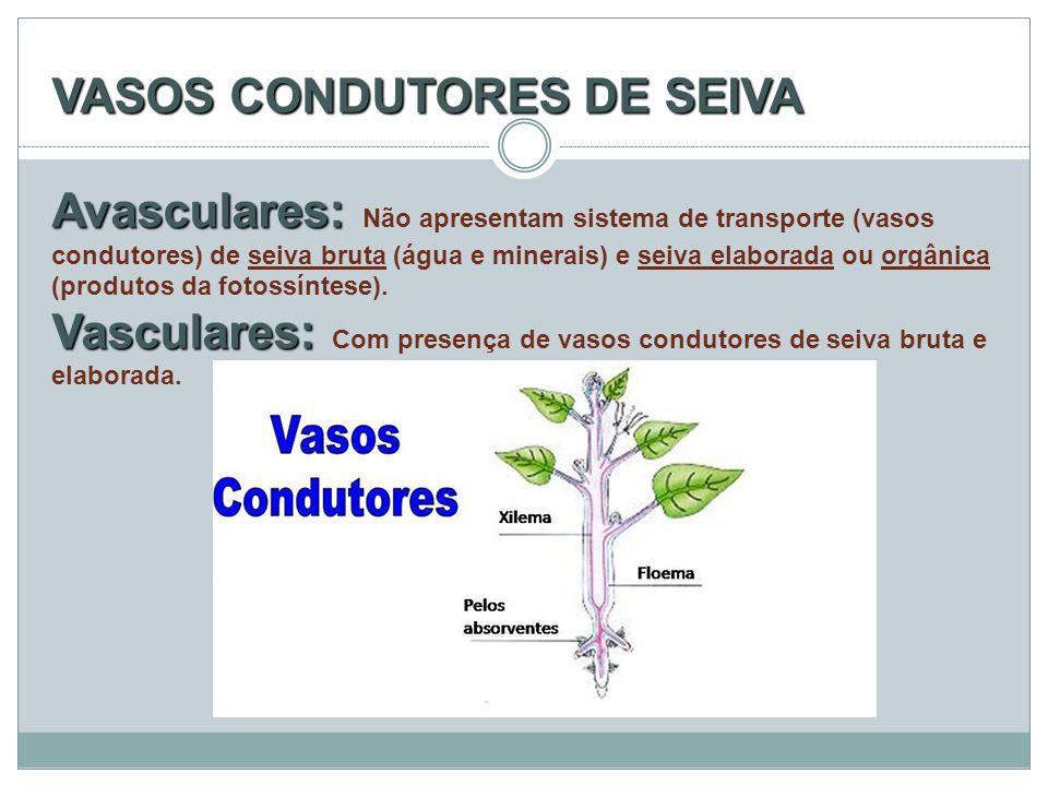 VASOS CONDUTORES DE SEIVA Avasculares: Vasculares: VASOS CONDUTORES DE SEIVA Avasculares: Não apresentam sistema de transporte (vasos condutores) de s