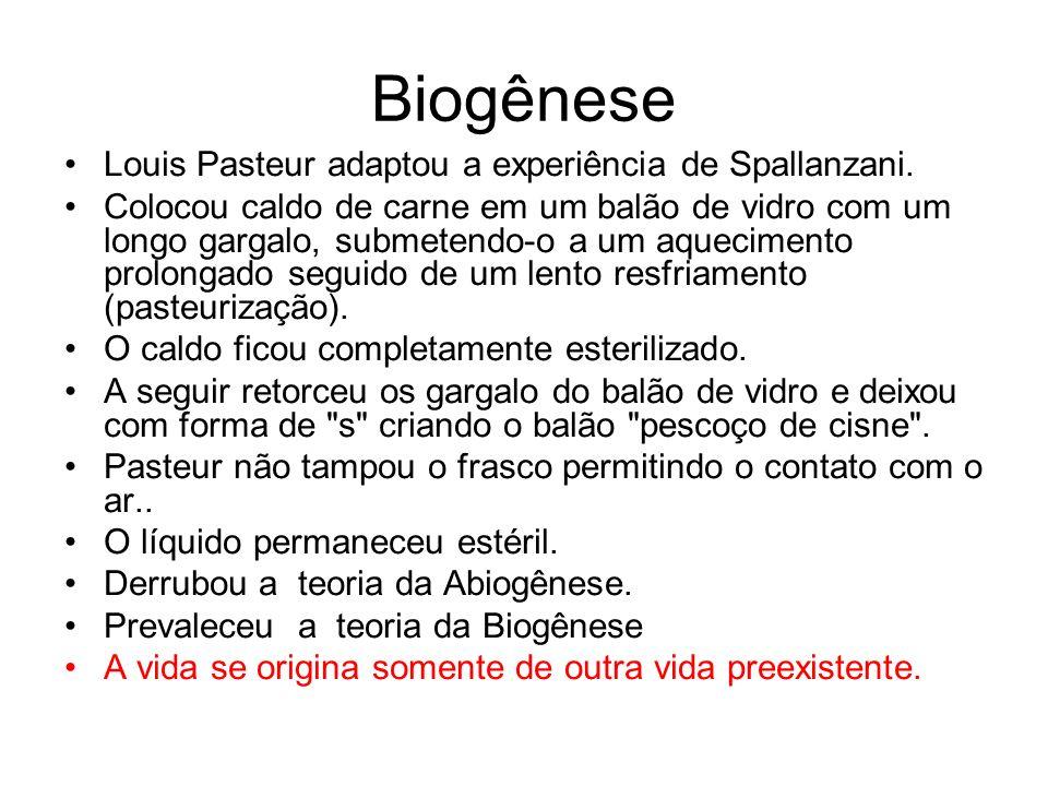 Biogênese Louis Pasteur adaptou a experiência de Spallanzani. Colocou caldo de carne em um balão de vidro com um longo gargalo, submetendo-o a um aque