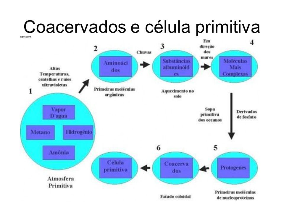 Coacervados e célula primitiva