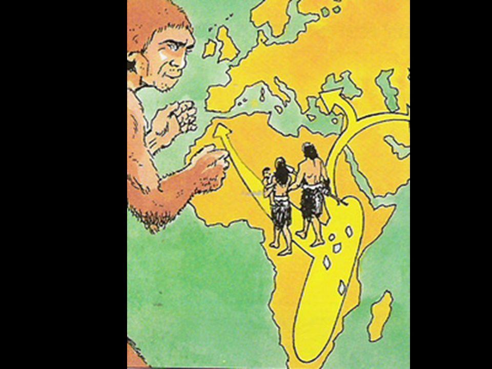 Principais hominídeos Australopithecus