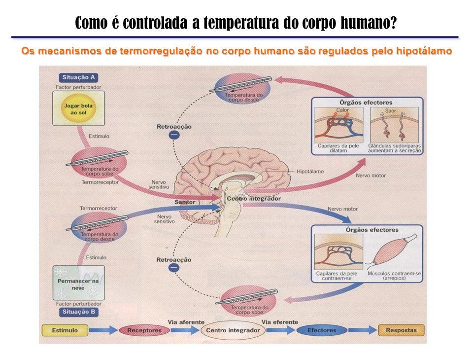 Como é controlada a temperatura do corpo humano? Os mecanismos de termorregulação no corpo humano são regulados pelo hipotálamo