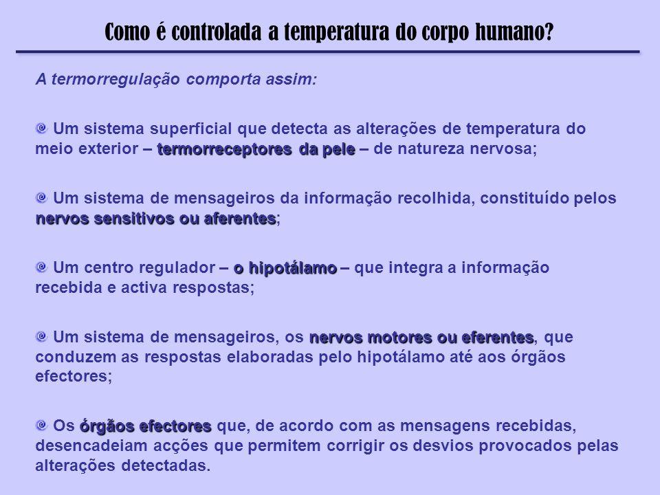 Como é controlada a temperatura do corpo humano? A termorregulação comporta assim: termorreceptores da pele Um sistema superficial que detecta as alte