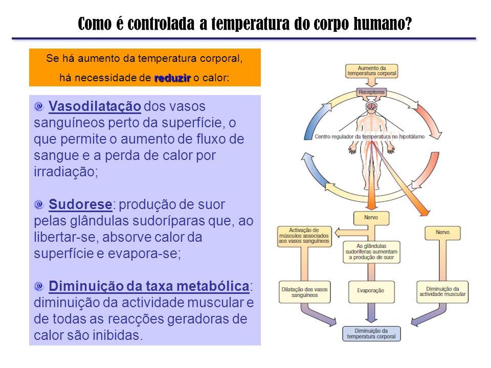 Como é controlada a temperatura do corpo humano? Se há aumento da temperatura corporal, reduzir há necessidade de reduzir o calor: Vasodilatação dos v