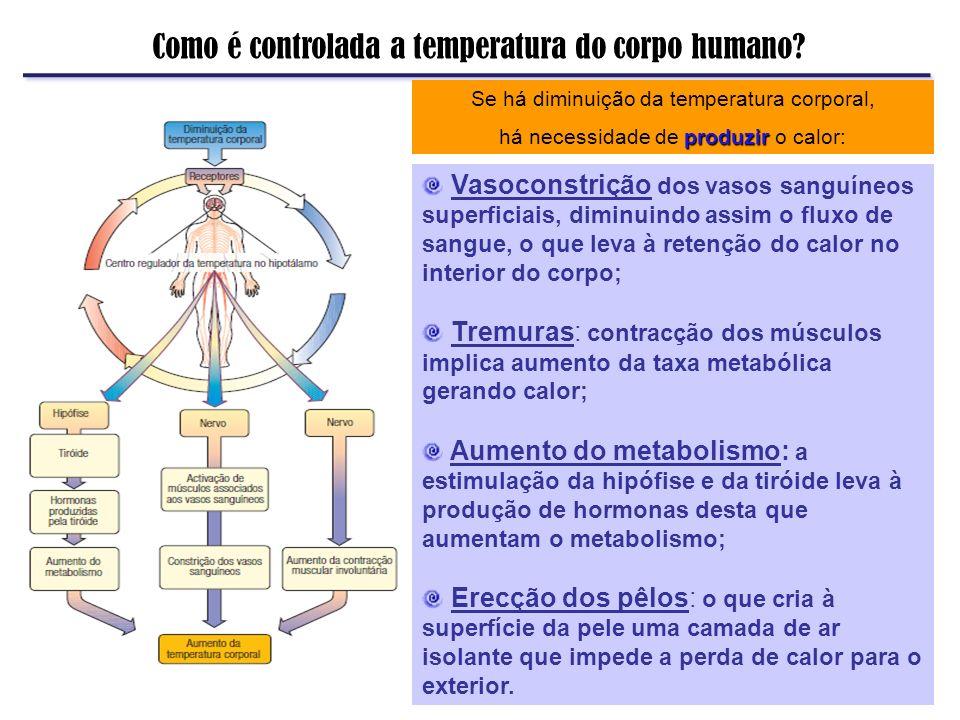Como é controlada a temperatura do corpo humano? Se há diminuição da temperatura corporal, produzir há necessidade de produzir o calor: Vasoconstrição