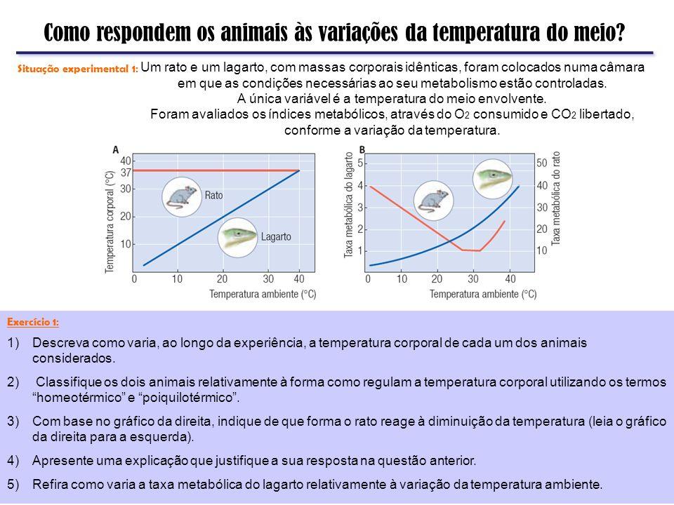 Como respondem os animais às variações da temperatura do meio? Um rato e um lagarto, com massas corporais idênticas, foram colocados numa câmara em qu