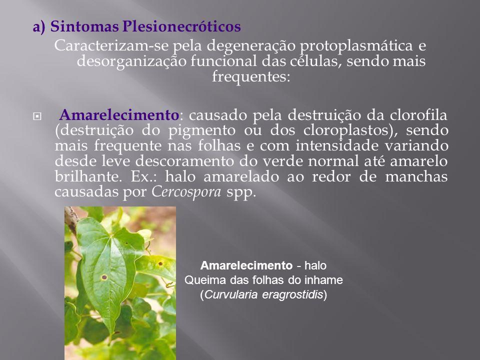 a) Sintomas Plesionecróticos Caracterizam-se pela degeneração protoplasmática e desorganização funcional das células, sendo mais frequentes: Amareleci