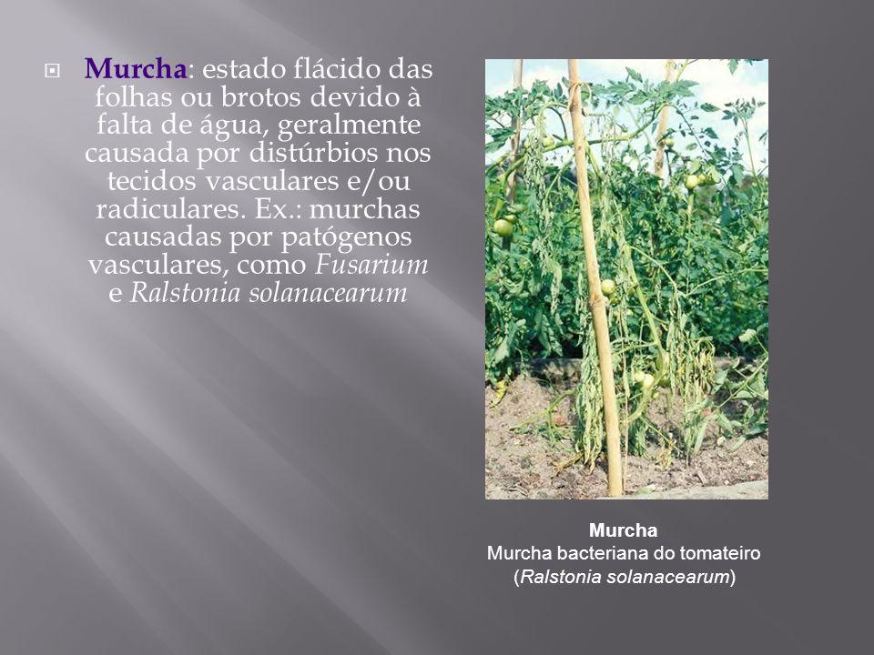 Murcha : estado flácido das folhas ou brotos devido à falta de água, geralmente causada por distúrbios nos tecidos vasculares e/ou radiculares. Ex.: m