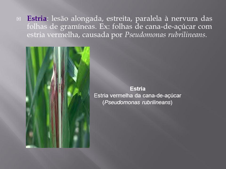 Estria : lesão alongada, estreita, paralela à nervura das folhas de gramíneas. Ex: folhas de cana-de-açúcar com estria vermelha, causada por Pseudomon