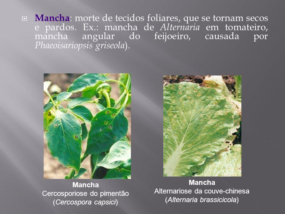 Mancha : morte de tecidos foliares, que se tornam secos e pardos. Ex.: mancha de Alternaria em tomateiro, mancha angular do feijoeiro, causada por Pha