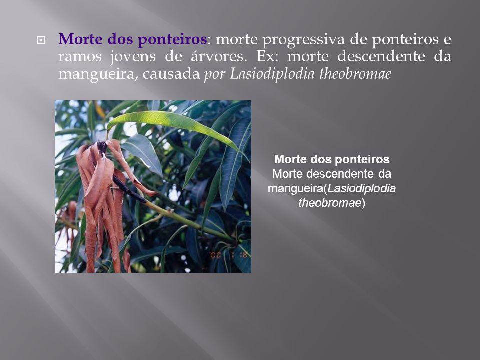 Morte dos ponteiros : morte progressiva de ponteiros e ramos jovens de árvores. Ex: morte descendente da mangueira, causada por Lasiodiplodia theobrom