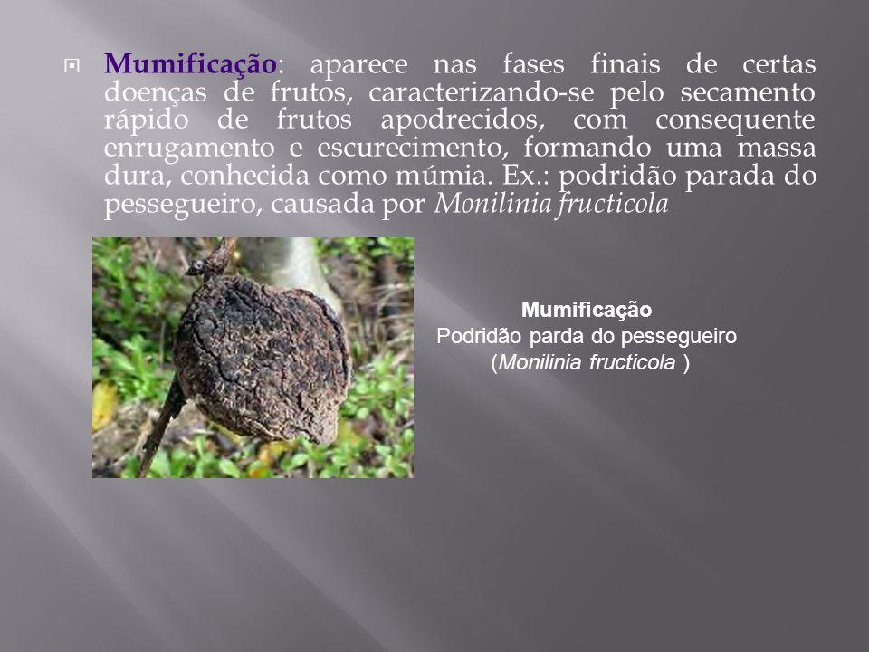 Mumificação : aparece nas fases finais de certas doenças de frutos, caracterizando-se pelo secamento rápido de frutos apodrecidos, com consequente enr