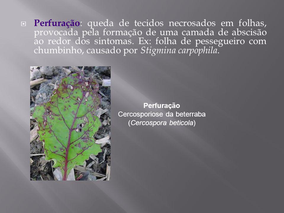 Perfuração : queda de tecidos necrosados em folhas, provocada pela formação de uma camada de abscisão ao redor dos sintomas. Ex: folha de pessegueiro