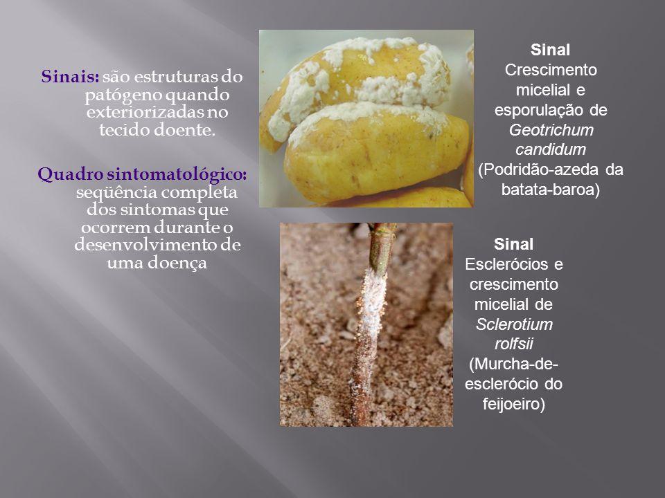 Sinais: são estruturas do patógeno quando exteriorizadas no tecido doente. Quadro sintomatológico: seqüência completa dos sintomas que ocorrem durante