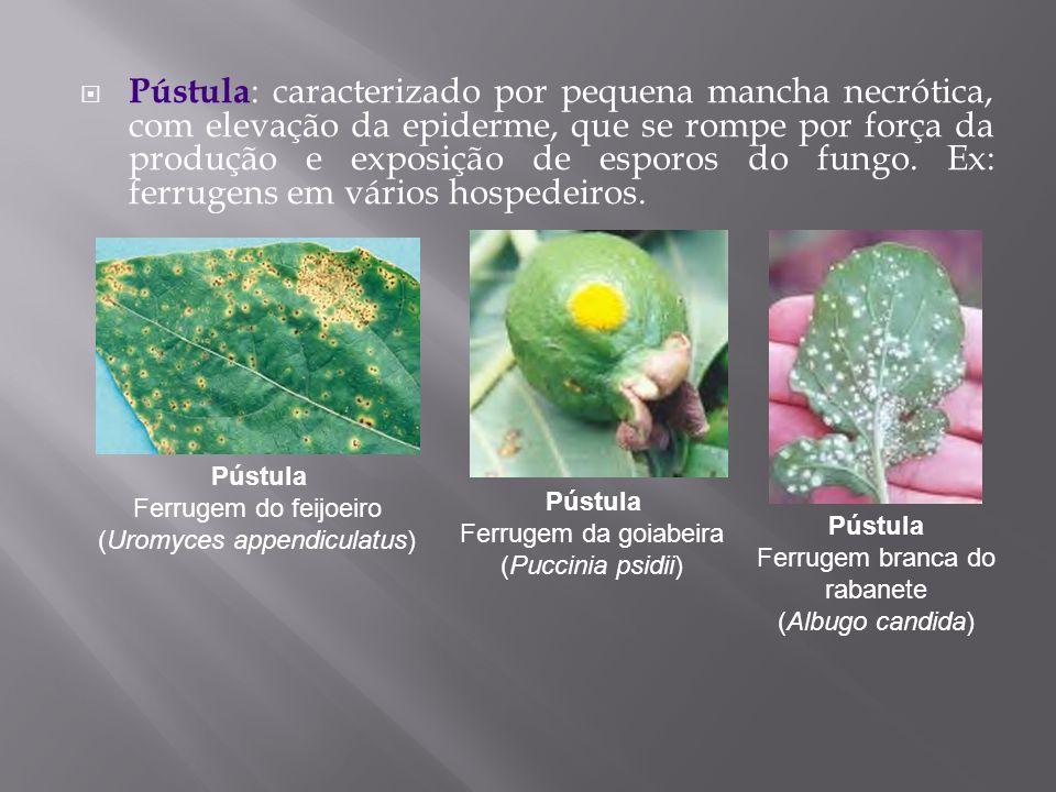 Pústula : caracterizado por pequena mancha necrótica, com elevação da epiderme, que se rompe por força da produção e exposição de esporos do fungo. Ex
