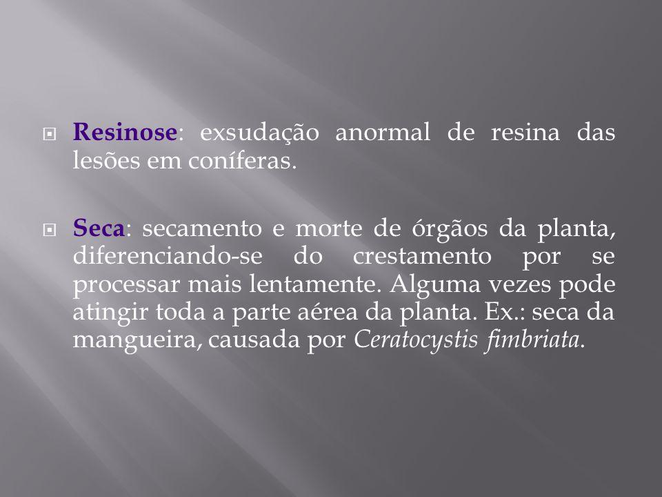 Resinose : exsudação anormal de resina das lesões em coníferas. Seca : secamento e morte de órgãos da planta, diferenciando-se do crestamento por se p