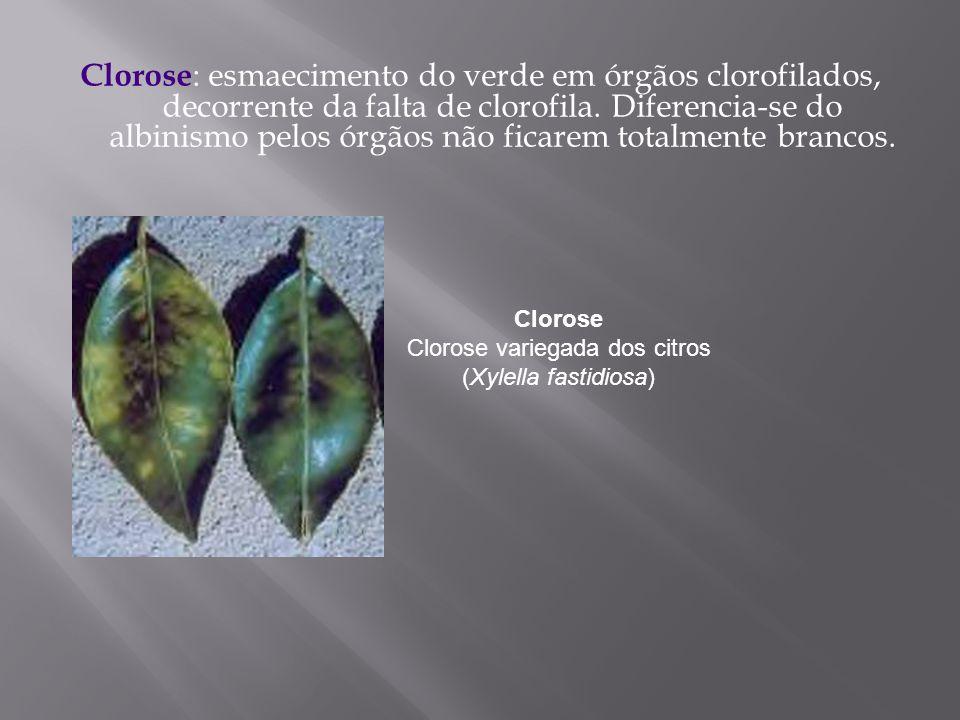 Clorose : esmaecimento do verde em órgãos clorofilados, decorrente da falta de clorofila. Diferencia-se do albinismo pelos órgãos não ficarem totalmen