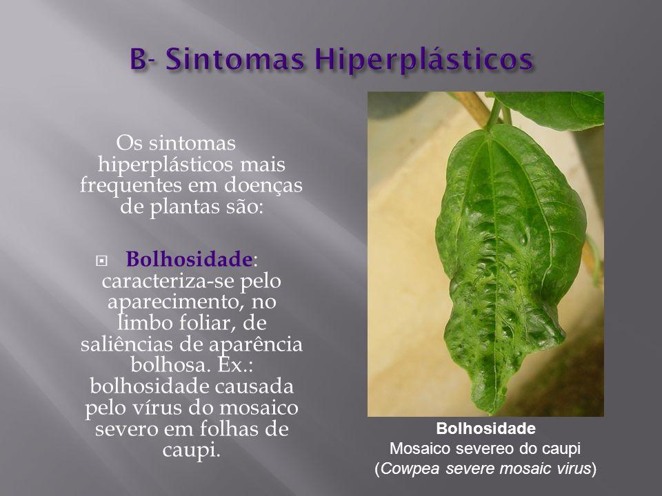 Os sintomas hiperplásticos mais frequentes em doenças de plantas são: Bolhosidade : caracteriza-se pelo aparecimento, no limbo foliar, de saliências d