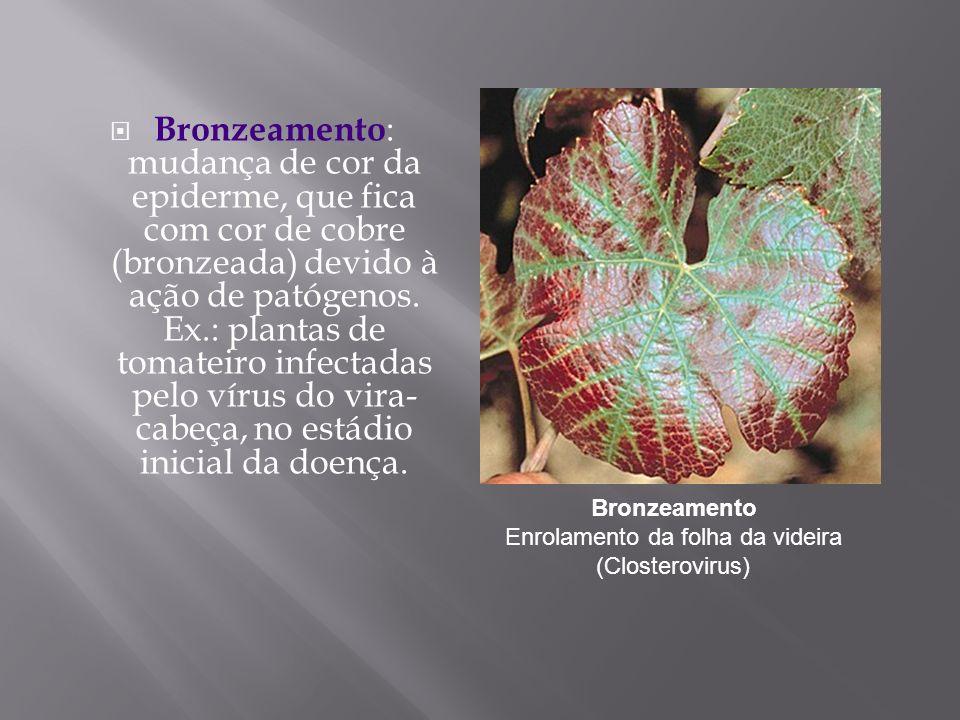 Bronzeamento : mudança de cor da epiderme, que fica com cor de cobre (bronzeada) devido à ação de patógenos. Ex.: plantas de tomateiro infectadas pelo
